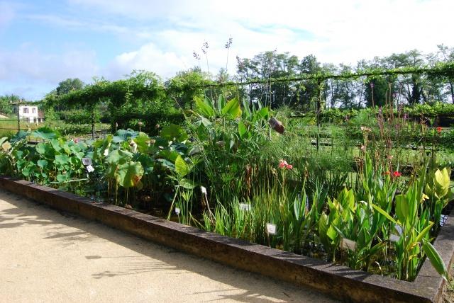 (47) Latour-Marliac, jardin de nénuphars - Le Temple-sur-Lot 466914DSC4914