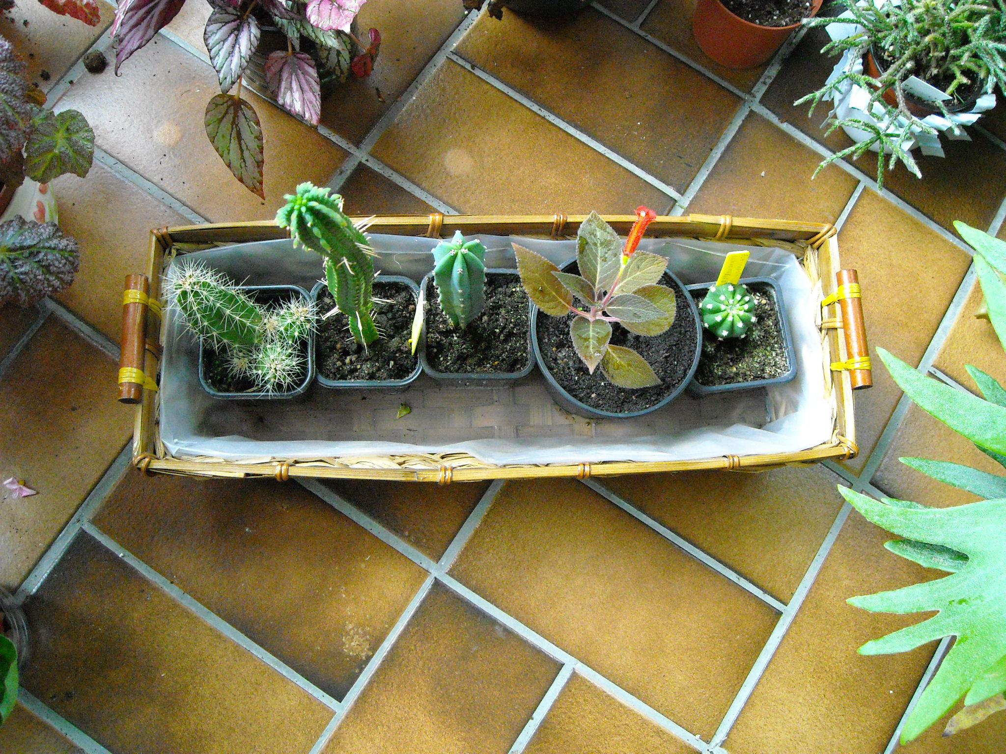 plante que j'ai ramené de chez mon ami Claude 470297plantedeclaude005