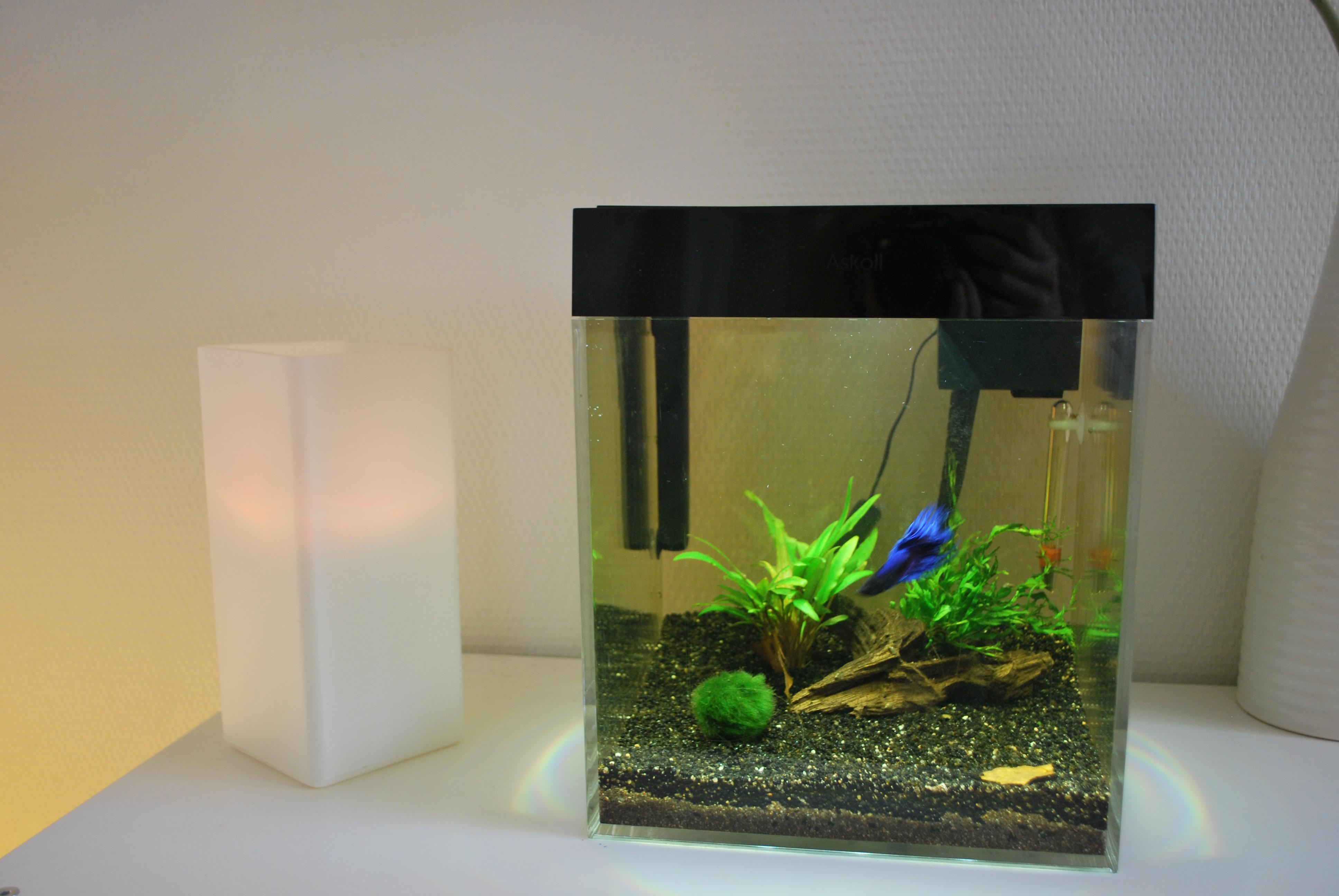 Mon premier aqua (13L) 471863DSC2482