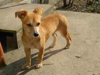 Arika, adorable croisée Pinscher née le 15/07/2012 en FA (89) 478373DSCN1367