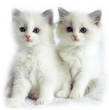 Mes tubages Chats 478675TubMel41