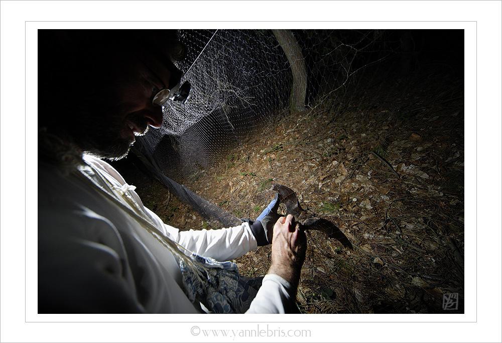 Soirées de capture chauves-souris 2012 - Page 4 491167filet3