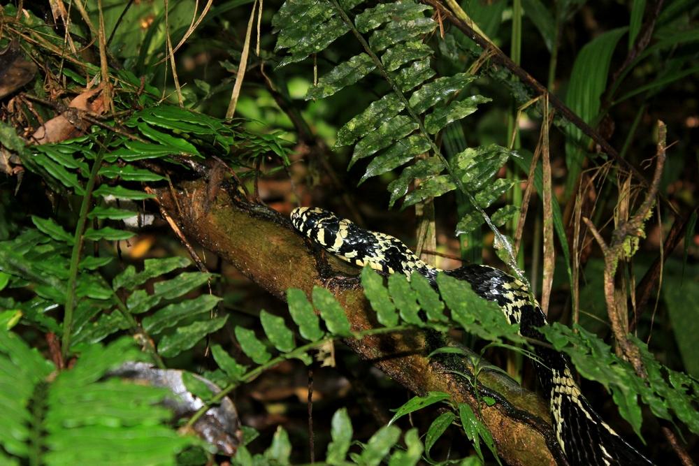15 jours dans la jungle du Costa Rica - Page 2 491329spilo1r