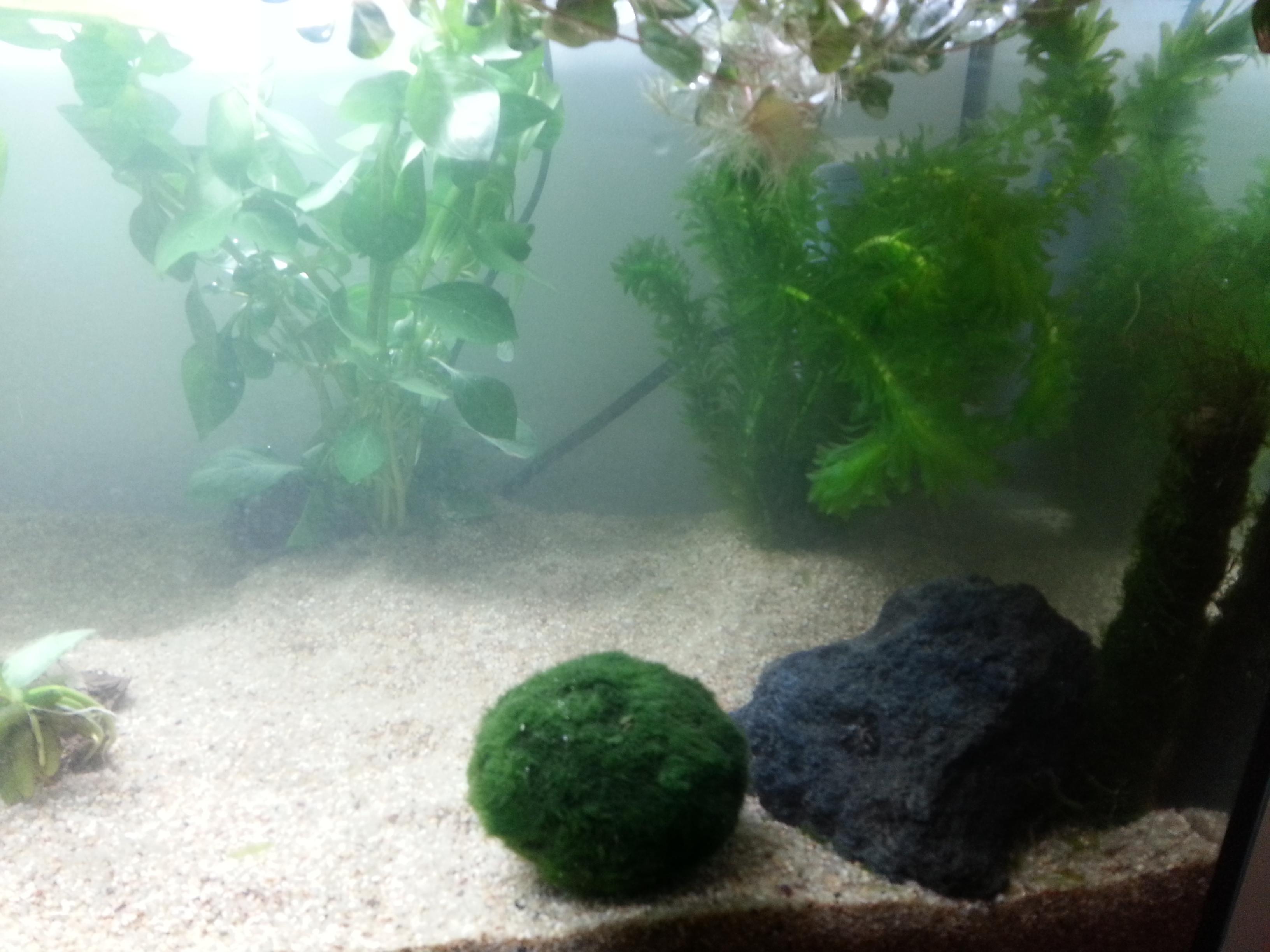 plante dans un aquarium 49183020130613003128