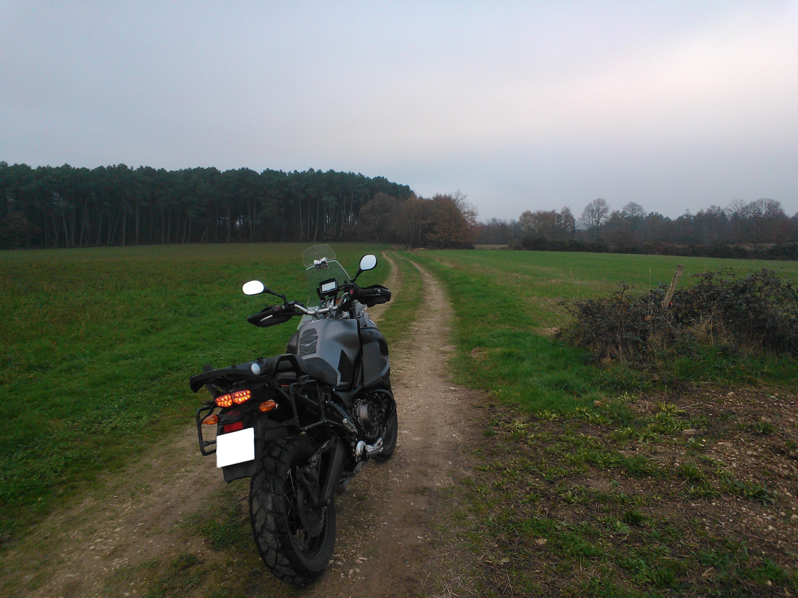 Balade dans les champs en Bretagne 492363WP201411303