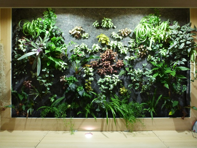 Le nouveau mur végétal de Olivetzou (projet fini à 98%) enfin les leds - Page 4 496081P1010537