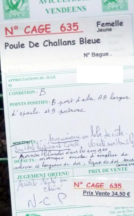 Poule de Challans - standard 498033P1110988
