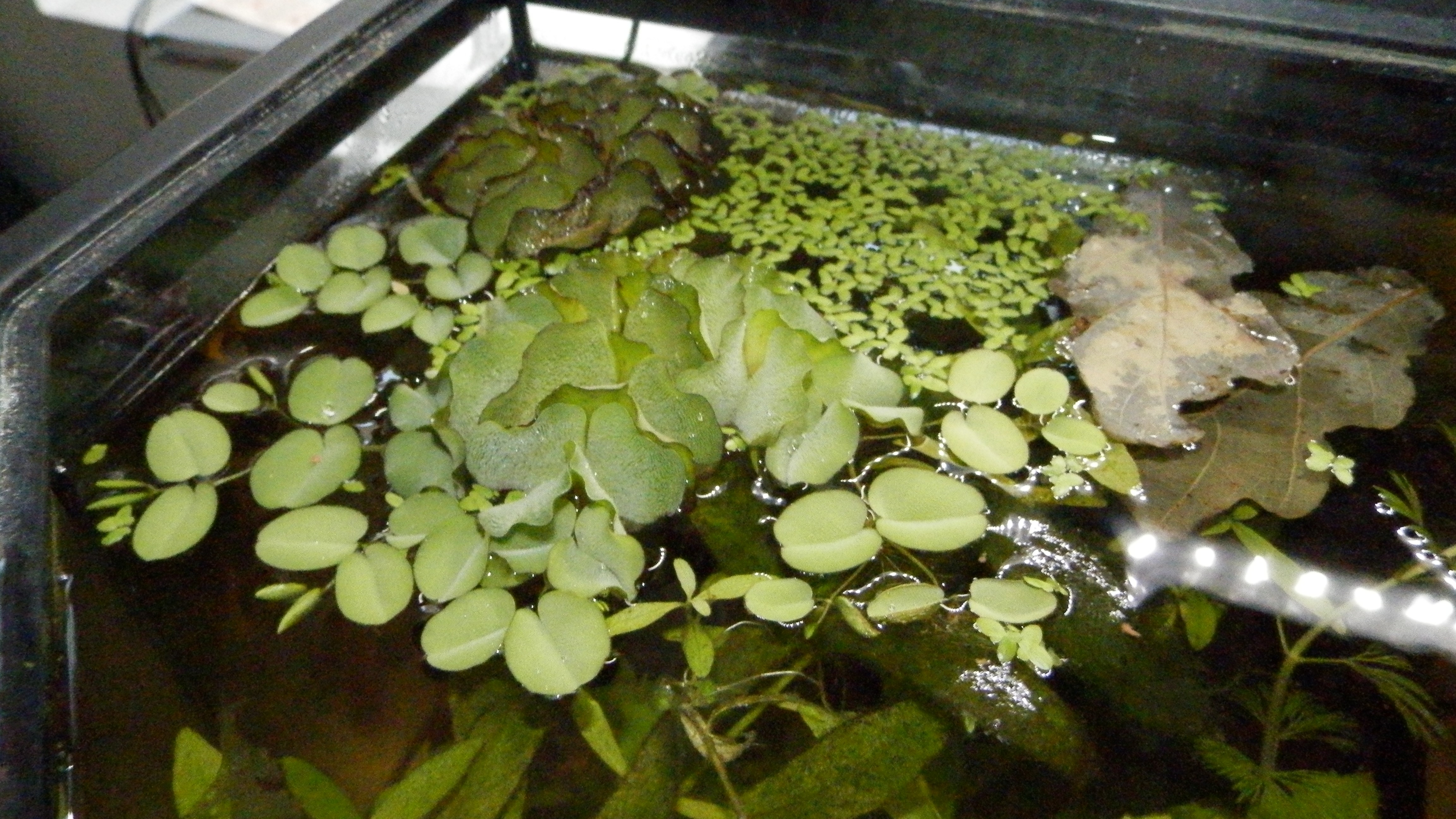 Mise en eau d'un aquarium 146 litres 502684005