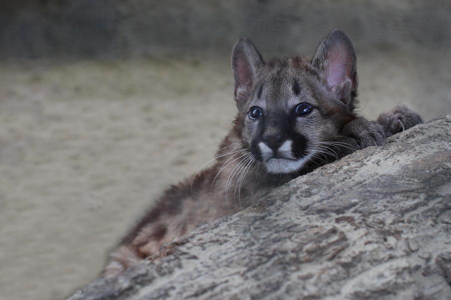 Sortie au Zoo d'Olmen (à côté de Hasselt) le samedi 14 juillet : Les photos 5038082681900