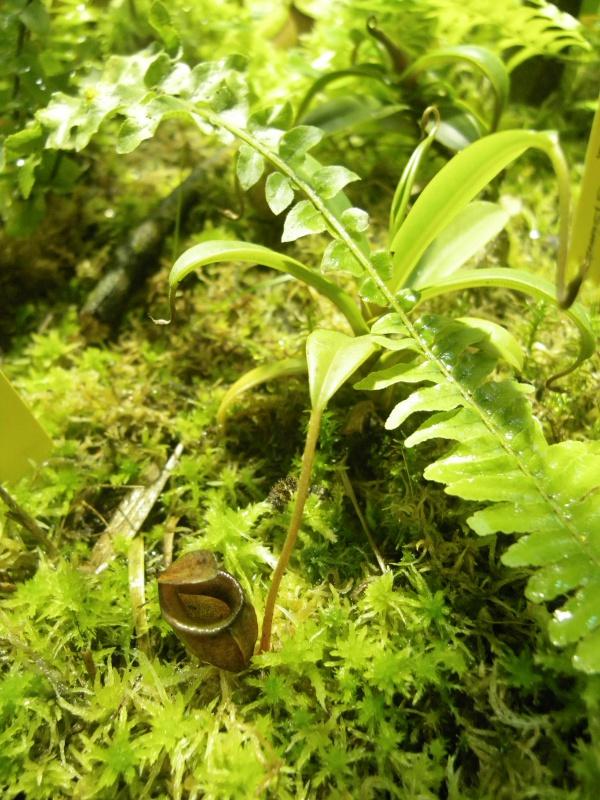 Mon terrarium highland 506493IMGP1845