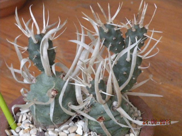 Aujourdui c'est rempotage de mes cactus! :) 507765DSCN1197