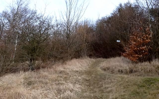 Trail des Poilus. 47kms . 11/03/2012. vu et couru par Seb. 509228TraildesPoilusMars2012050