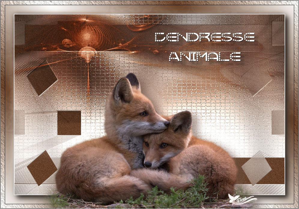 Tendresse Animale (PSP) 509929renardsdeAnimabelle