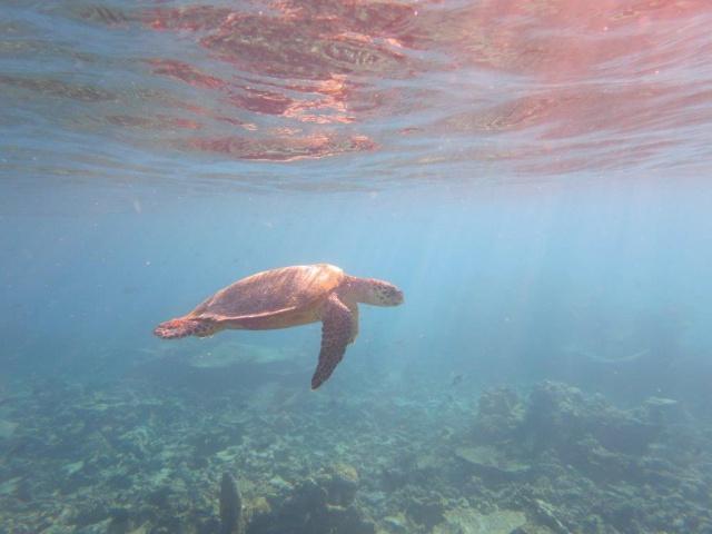 Quelques photos de mes dernières vacances (Maldives) 509993IMG3774