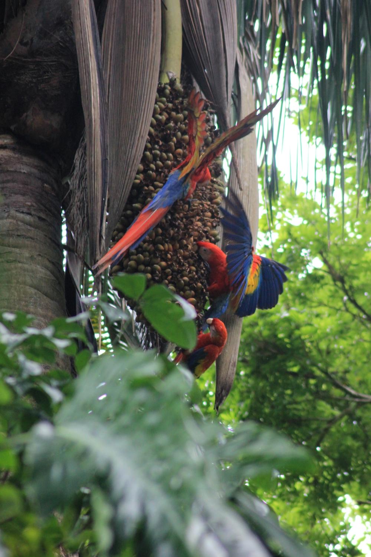 15 jours dans la jungle du Costa Rica 512656ara2r