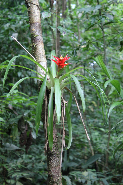 15 jours dans la jungle du Costa Rica 519702costa3r