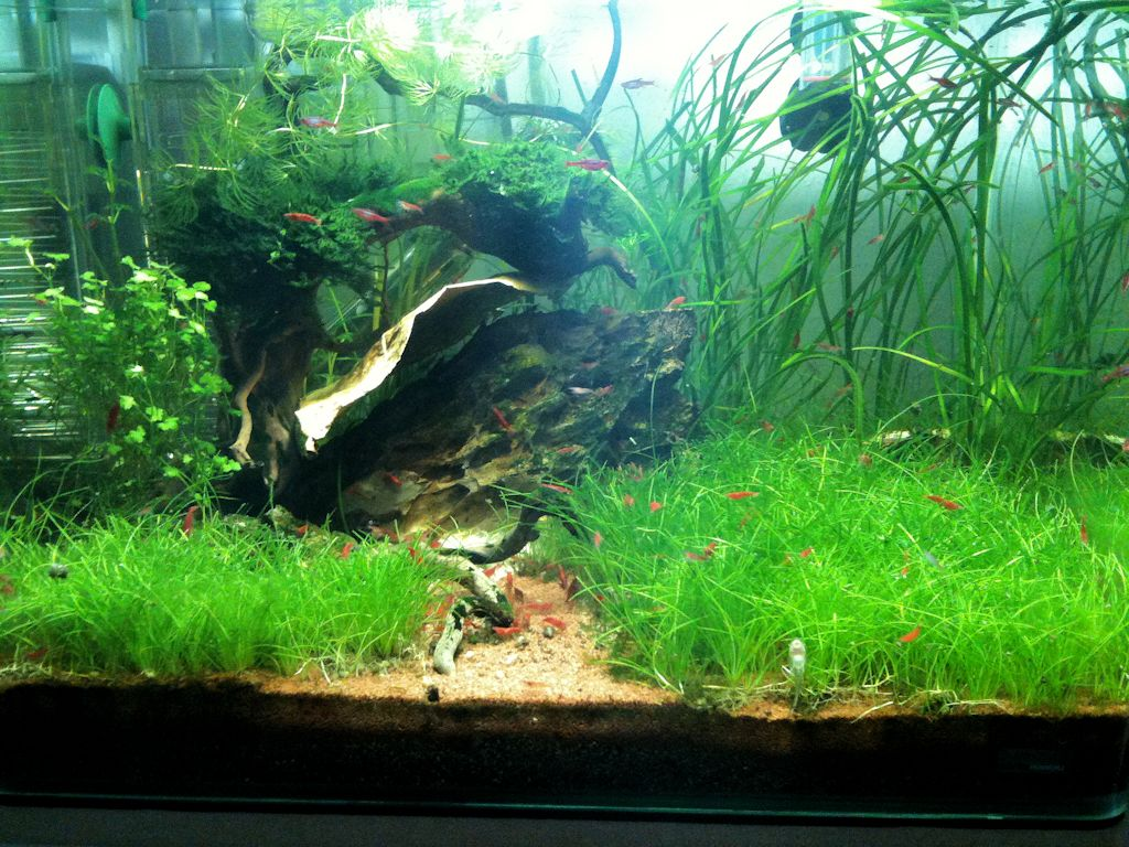 Mon Scaper's Tank 50L Aquascaping - Page 9 519827IMG0933