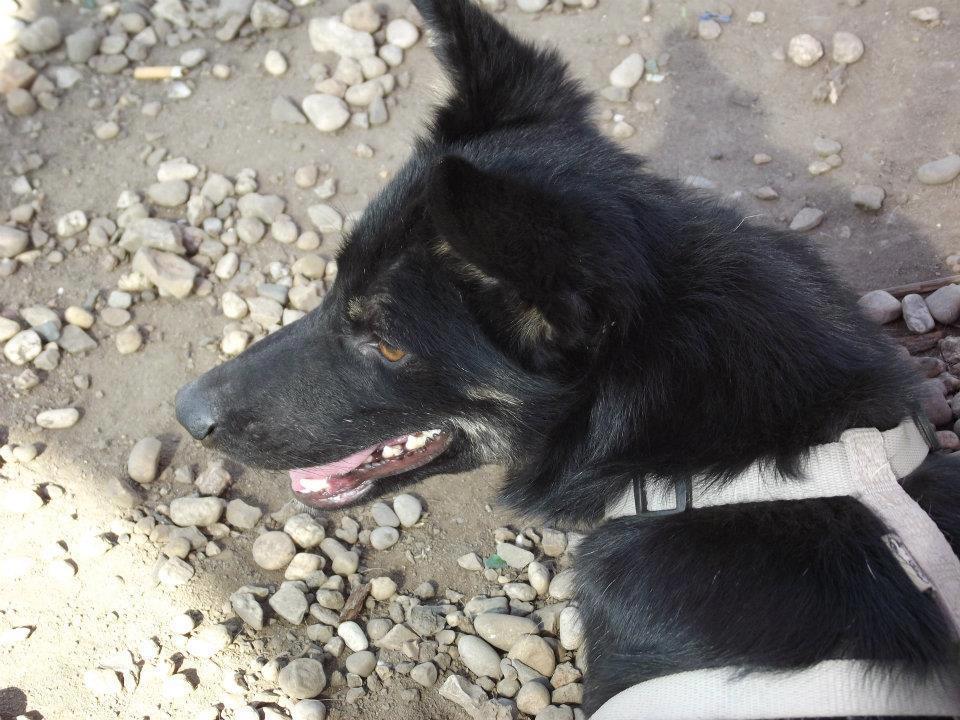 > Mika, un amour de petite chienne, née en mai 2011 - Adoptée 5275015331172870026580507511499692372n