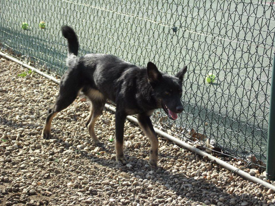 > Mika, un amour de petite chienne, née en mai 2011 - Adoptée 53138953590834189038268901994064740n