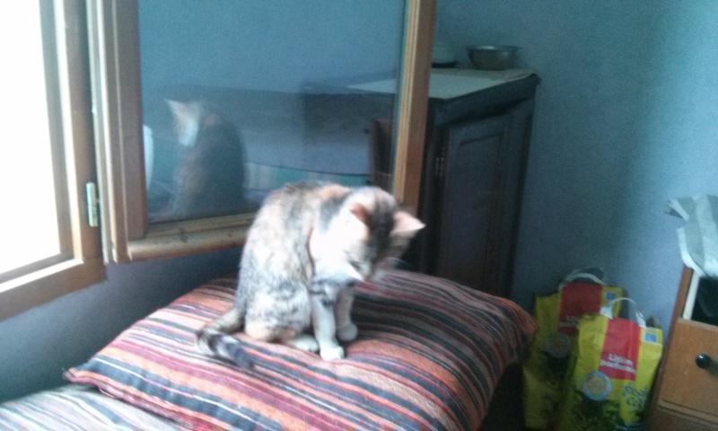 DUCHESSE - chatte femelle, née 2011/2012, borgne - (PASCANI) - adoptée par Chantal Pascal (dpt 63) - Page 3 5379793848