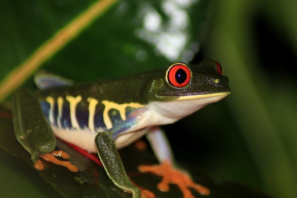 15 jours dans la jungle du Costa Rica 541035aga3r