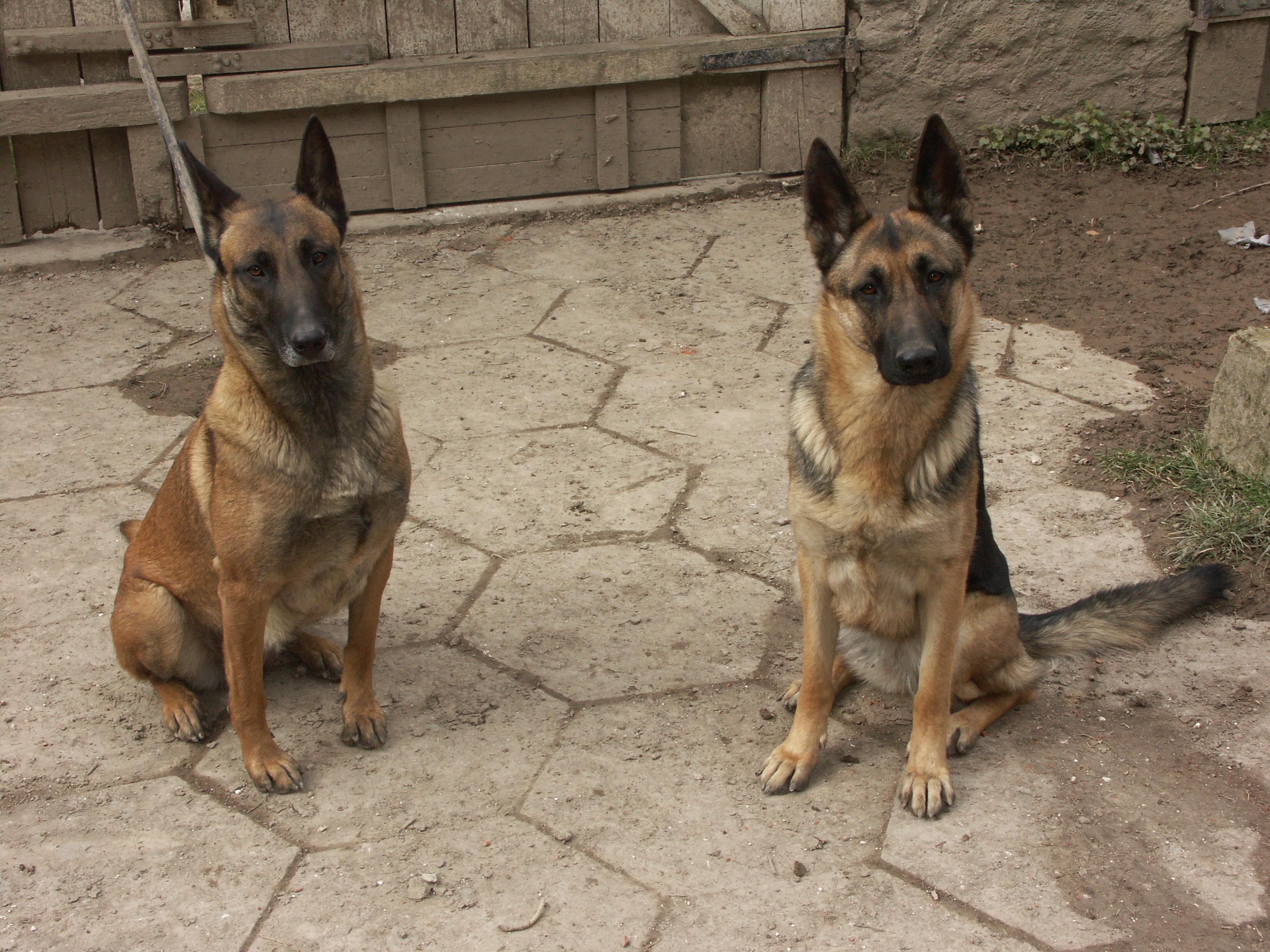 mes deux chiennes vont mourir... - Page 4 54826420050313004ScaryUlna