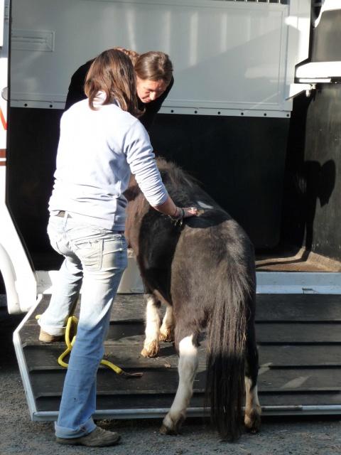 (Dept19) BIJOUX, Shetland, réservé par Lola1605 !!!! (Octobre 2012) 550942bijoux3