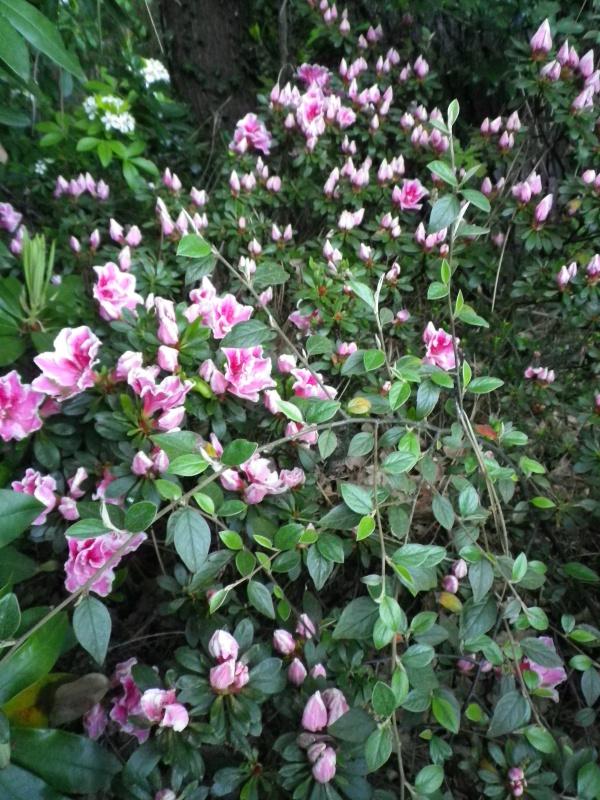 Quelques floraisons - Page 2 551359IMGP3094