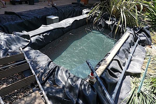 Bassin extérieur avec voiles de chine - Page 3 554820DSC09847copie