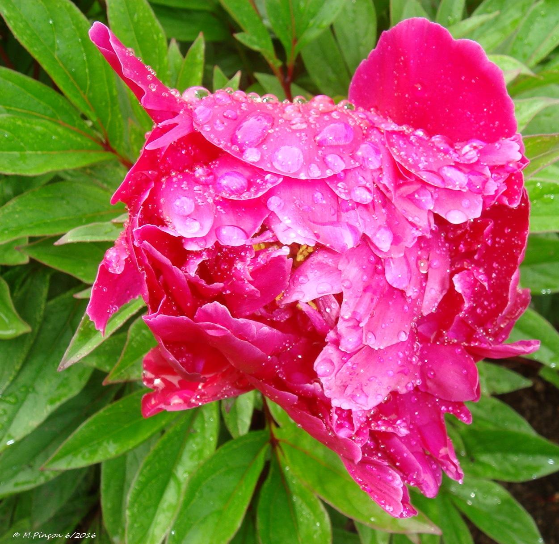 [Fil Ouvert] Fleurs 554916DSC010474