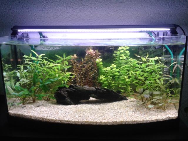 Aqua 50l planté. 56093020150814181706
