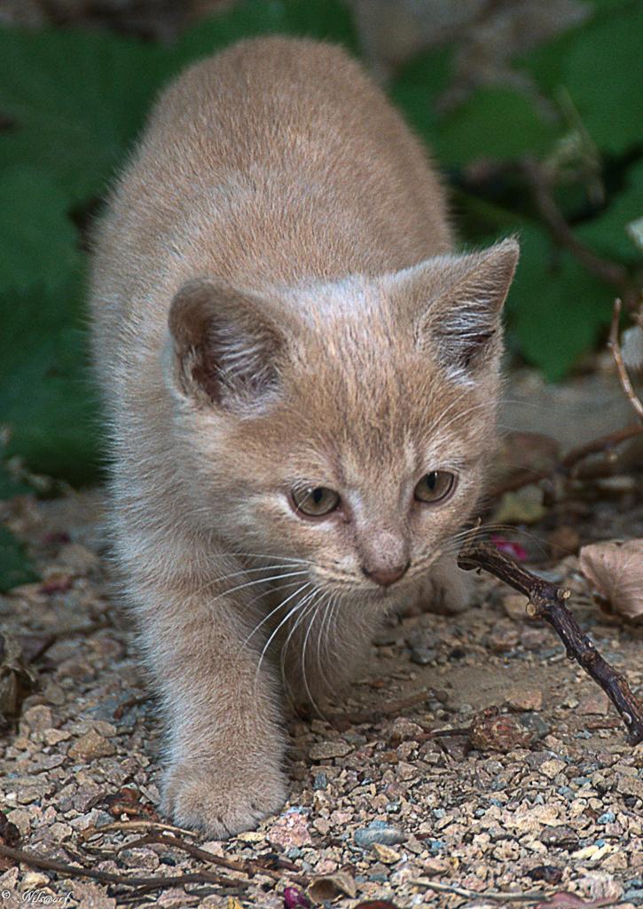 [fil ouvert] Les chats  562000DSC0803DxO