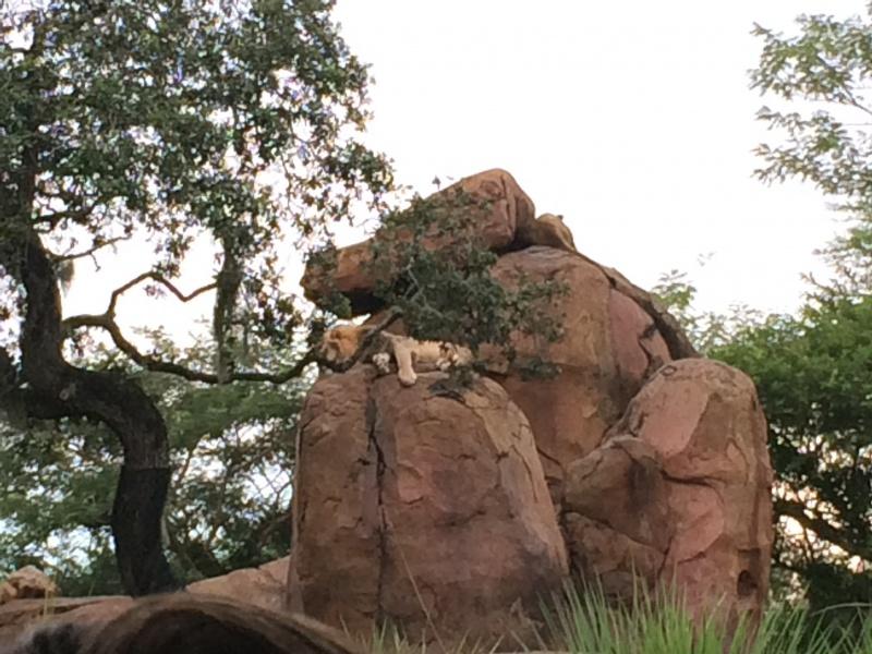 Walt Disney World + Universal Studios + Sea World + Busch Gardens Summer 2014 - Page 4 563538IMG2804