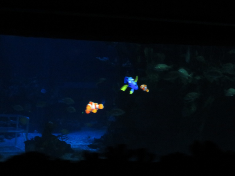 Walt Disney World + Universal Studios + Sea World + Busch Gardens Summer 2014 565823IMG0248