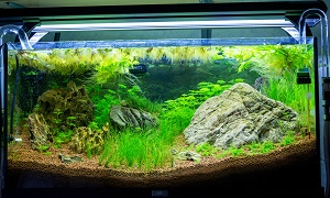 trigon 190 + cuve 120x30x40 aquascaping - Page 3 566584aqua29091Copie