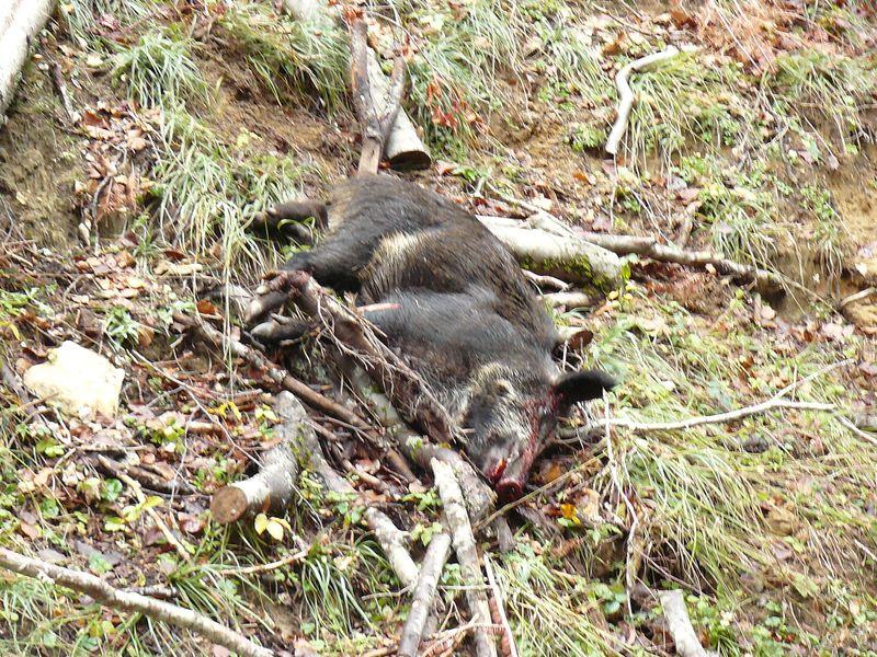 sacré week-end de chasse 566724P1070030