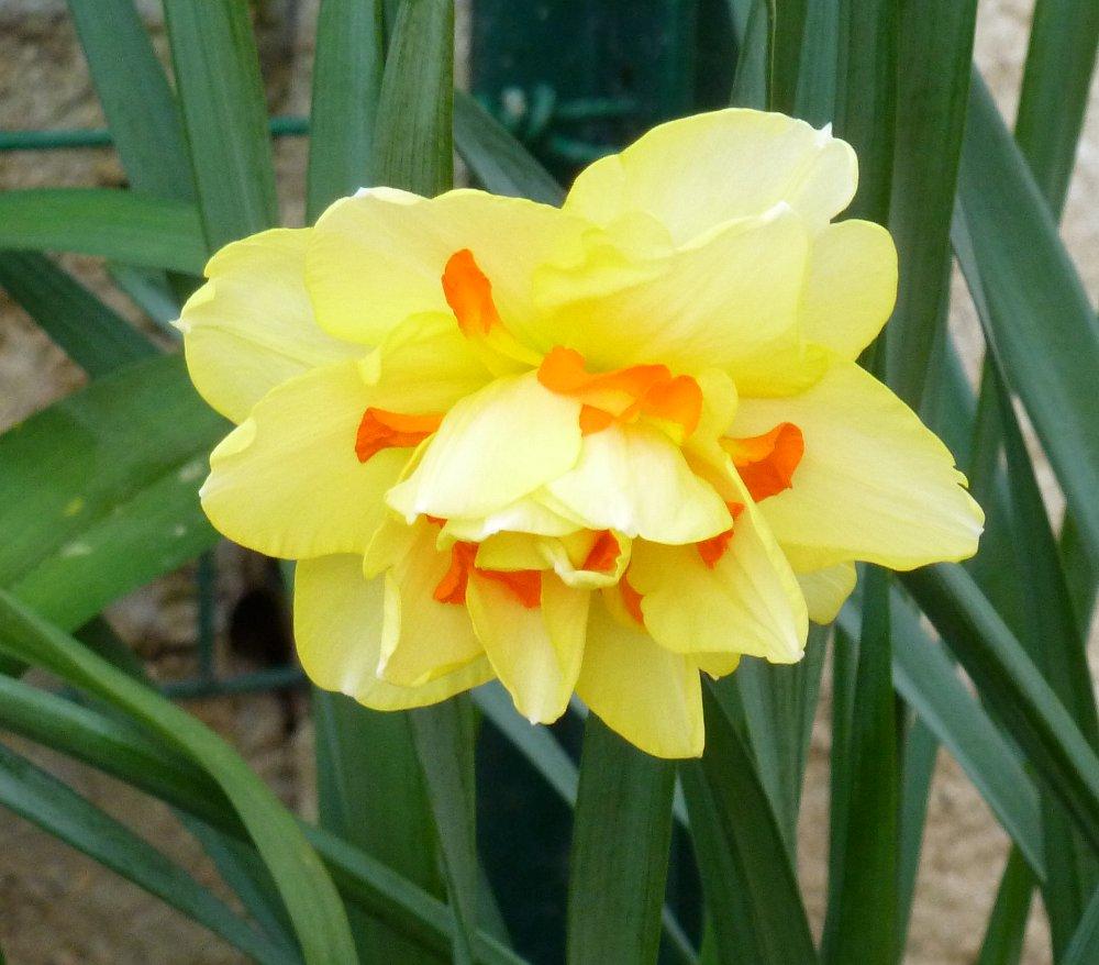Encore quelques floraisons... 569742P1010671