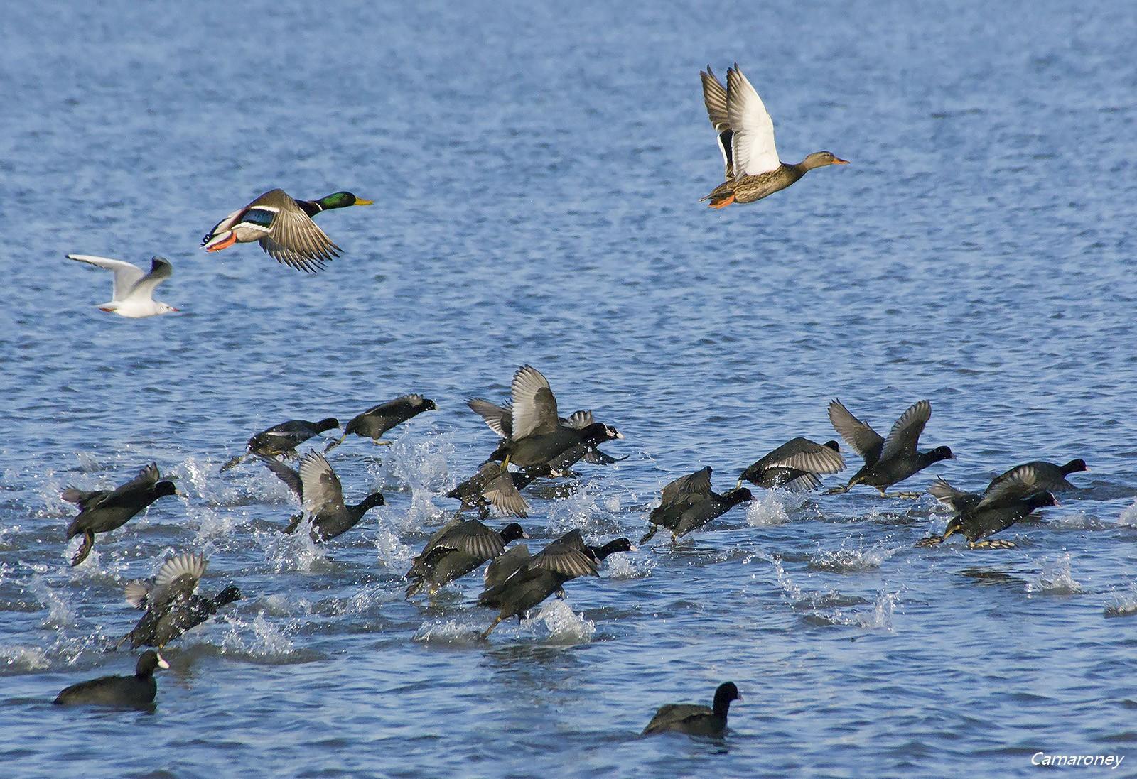 Parc ornithologique du pont de Gau  570451DSC52301600