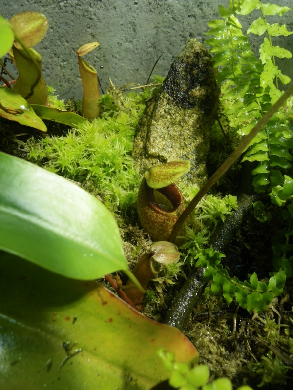 Mon terrarium highland 570634IMGP1850