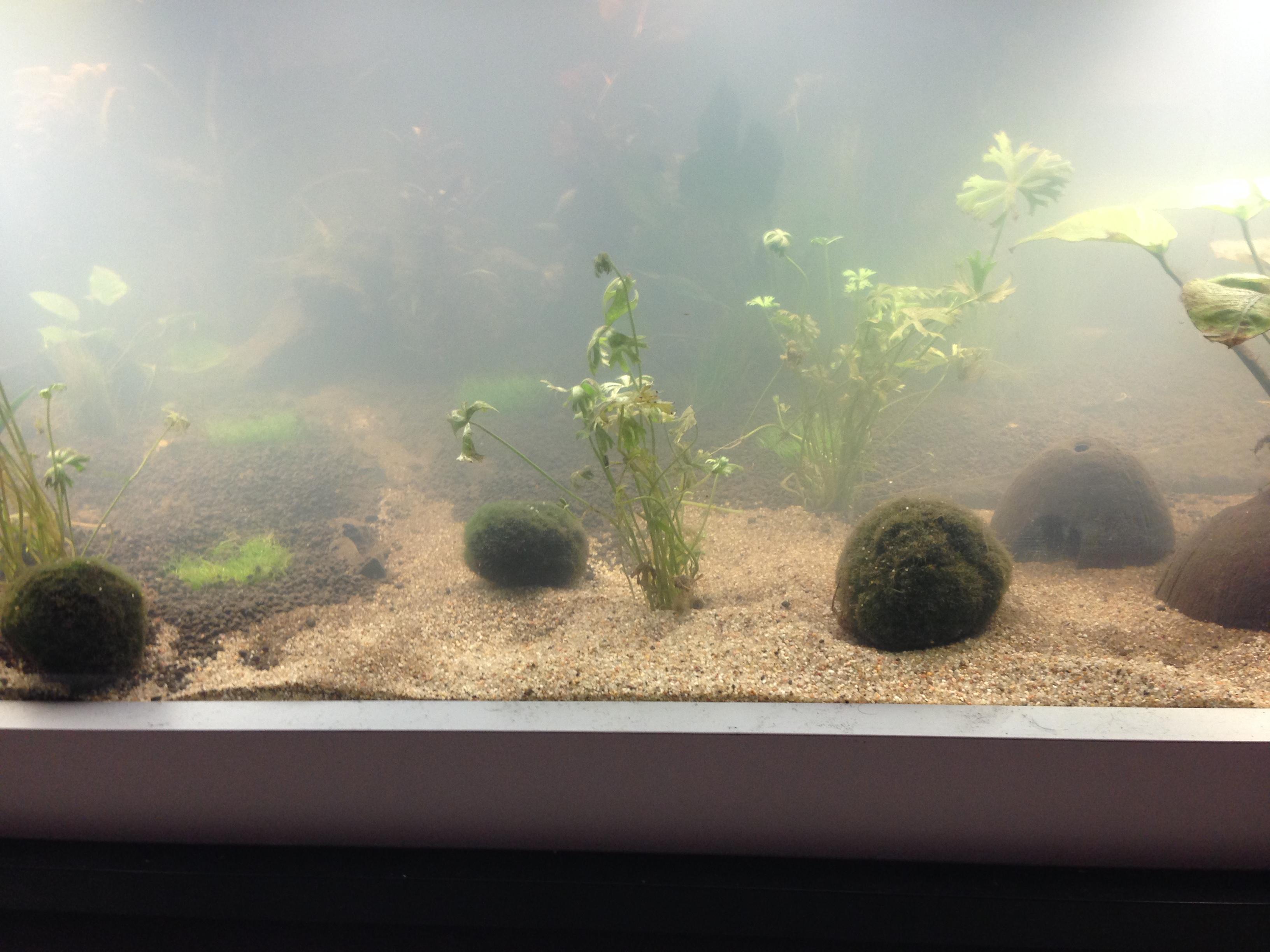 Mesures incohérentes et algues brunes 575234IMG02421