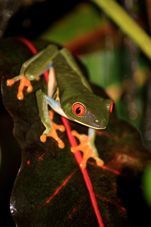 15 jours dans la jungle du Costa Rica 576527aga4r