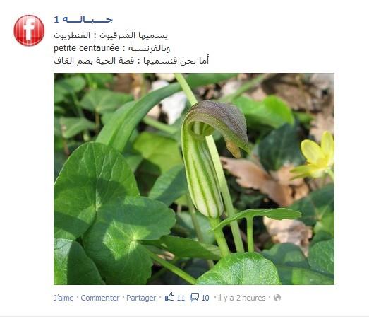 نباتات وأعشاب بلادي 580280158015761575160415771