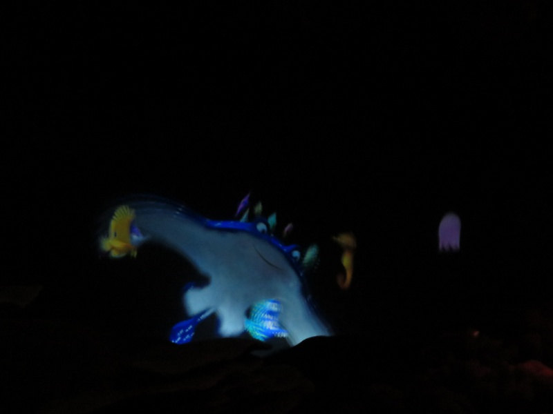 Walt Disney World + Universal Studios + Sea World + Busch Gardens Summer 2014 581392IMG0242