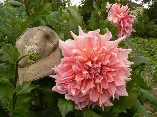 Aimez vous les fleurs  581400P1140590