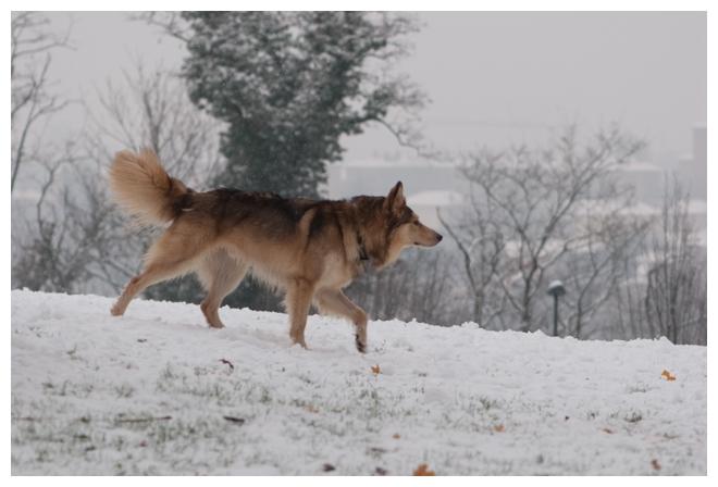 Nos loups grandissent, postez nous vos photos - Page 9 582588DSC4972640x480