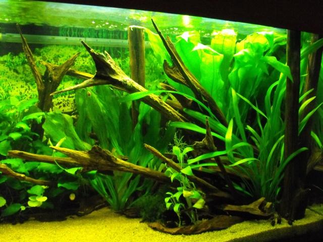 mes aquariums 582899240L2