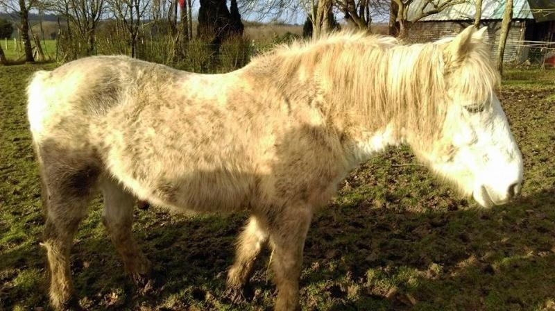 GRISOU - ONC poney né en 1994 - adopté en août 2010 - décédé pendant l'été 2017 - Page 2 58319112508778102038946282453346543843793464193428n