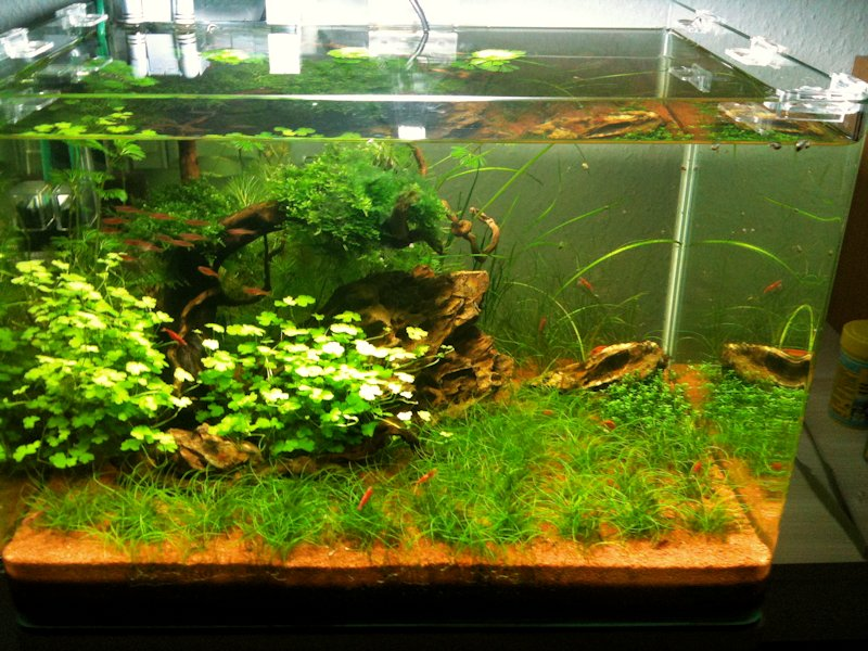 Mon Scaper's Tank 50L Aquascaping 583517IMG0386