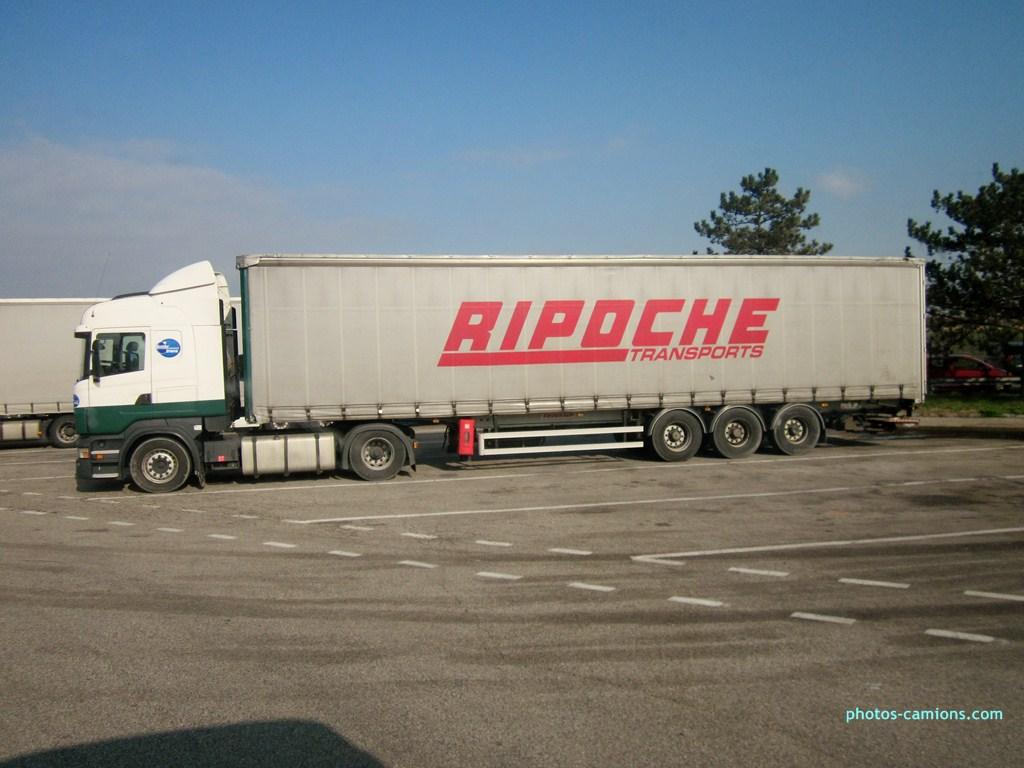 Ripoche (Beaupréau, 49) 586284photoscamions15II201324Copier