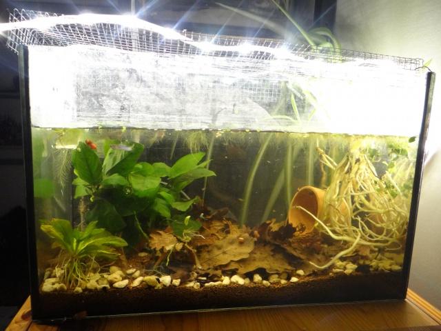 Ma Fish'étagère et les autres  - Page 13 588213DSC00082